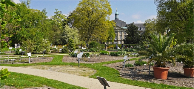 Der botanische Garten im Schlosspark Münster