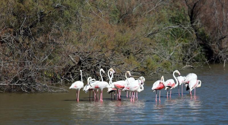 Flamingos Zwillbrocker Venn